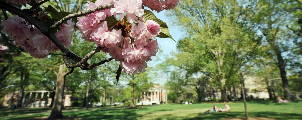 Spring flowers at the University of North Carolina at Chapel Hill.
