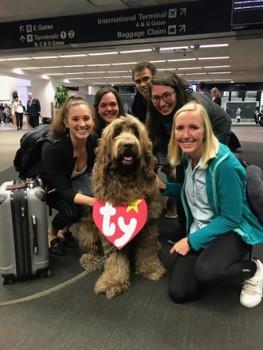 NAVBO 2019 airport dog